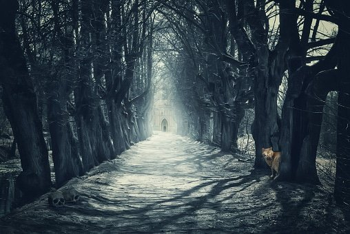 Halloween mystical background with dark forest and road