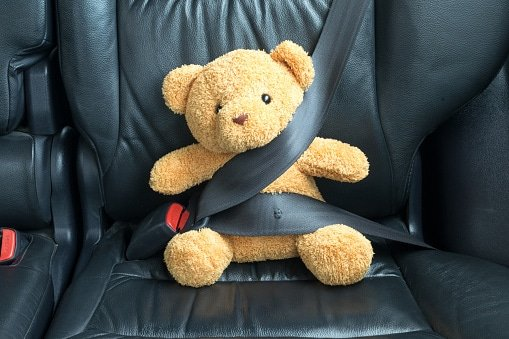 teddy driving