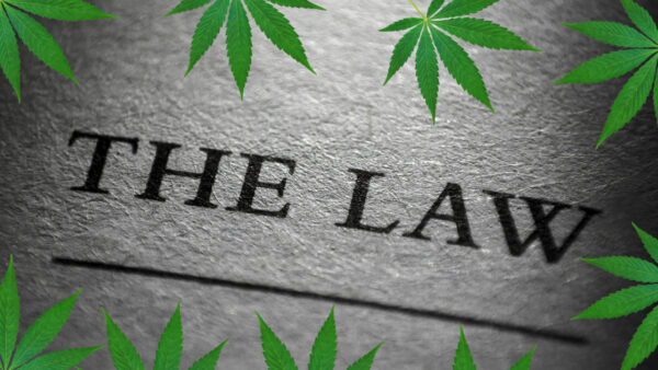 the law and cannabis