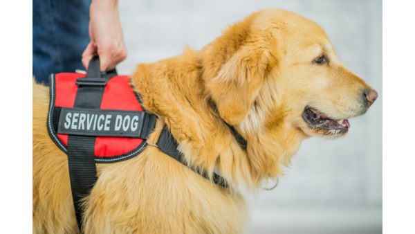 service dog on road test ICBC
